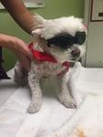 DPC Veterinary Hospital in Davie, FL, photo #2