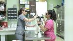 DPC Veterinary Hospital in Davie, FL, photo #57