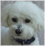 Dos Vientos Luv N Care Pet in Newbury Park, CA, photo #4