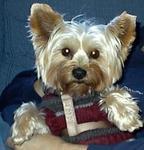 Dos Vientos Luv N Care Pet in Newbury Park, CA, photo #5