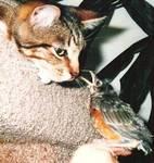 Dos Vientos Luv N Care Pet in Newbury Park, CA, photo #6