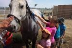 Schibel Teaching Farm in Bend, OR, photo #1