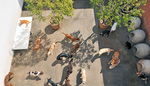 Cagefree K9 Camp in Los Angeles, CA, photo #2