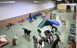 Cagefree K9 Camp in Los Angeles, CA, photo #3