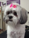 Fetching Grooming & Pet Boutique in Scranton, PA, photo #8