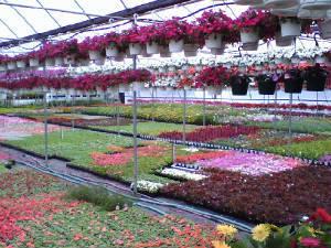 Greenhouse_jpg_w300h225