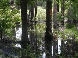 Swamp Stroll - Loxahatchee National Wildlife Refuge