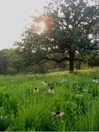 Whiterock Conservancy Oak Savannah Restoration site