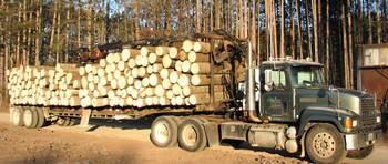 Sawmill Operations in Northeastern Wisconsin (Photo by TWSawmill)