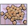 Lentils Image