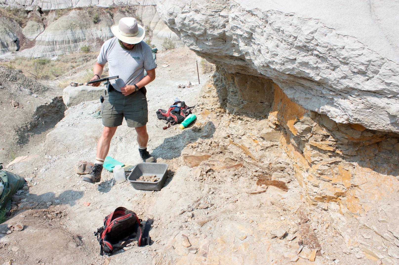 palaeontologist at dinosaur provincial park