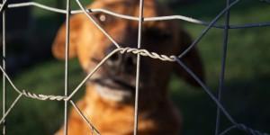 Protetores de animais denunciam maus tratos e abandonos em Holambra