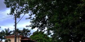 Holambra aparece na 33ª posição em ranking de arborização urbana