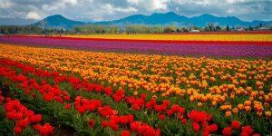 Vestibular da Faculdade das Flores de Holambra acontece neste sábado