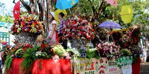 Carnaval de rua em Holambra reúne 10 mil foliões