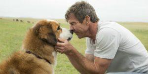 Cinebiblioteca exibe Quatro Vidas de um Cachorro em Americana