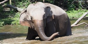 Itatibapossui maior zoológico particular do Brasil
