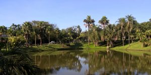 Jardim Botânico de Paulínia encanta visitantes