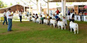 Valinhos sedia primeira ExpoAgro
