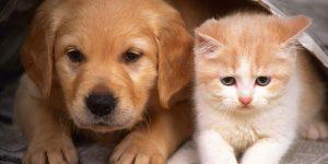 ONG fará campanha de doação de animais em Americana