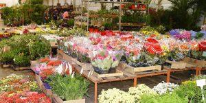 Mercado de Flores da Ceasa espera crescimento de vendas no Dia de Finados