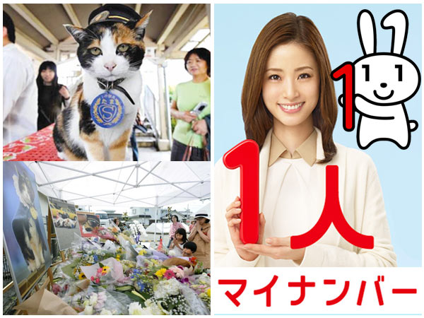 Japan's love of cats, and the cutest Social Security Number program ever