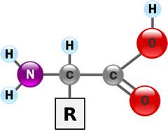 Molecular Structure of Amino Acid