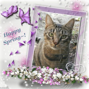 HappySpringtimeKitty