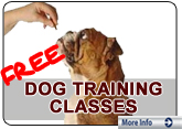 Dog TrainingClases