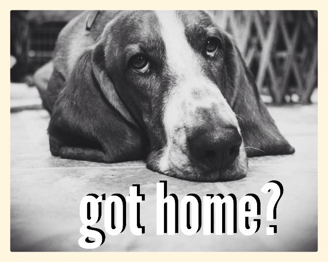 Got Home?