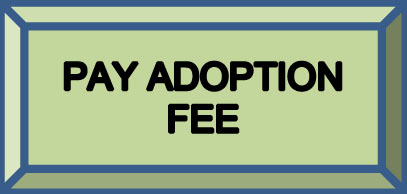 Adoption Fee Button Lg