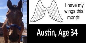 GA Austin wings