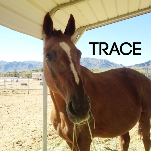 SG trace