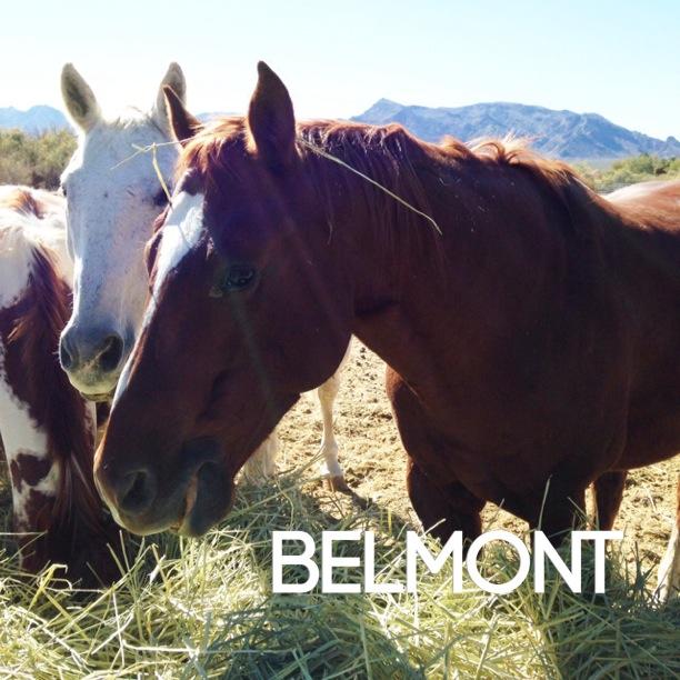 SG belmont