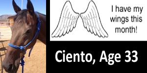GA ciento wings