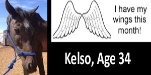 GA Kelso wings
