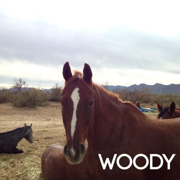 SG woody