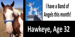 GA Hawkeye BOA