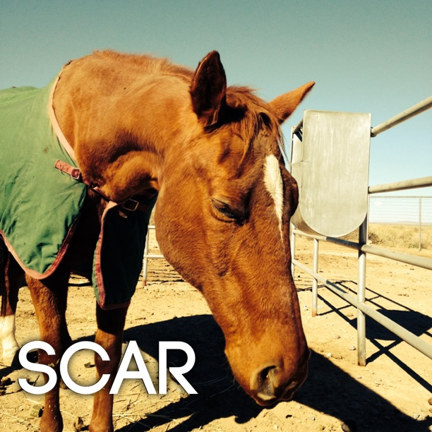 GA scar