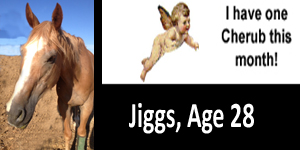 GA jiggs cherub