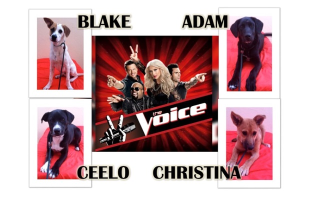 Our Version of The Voice
