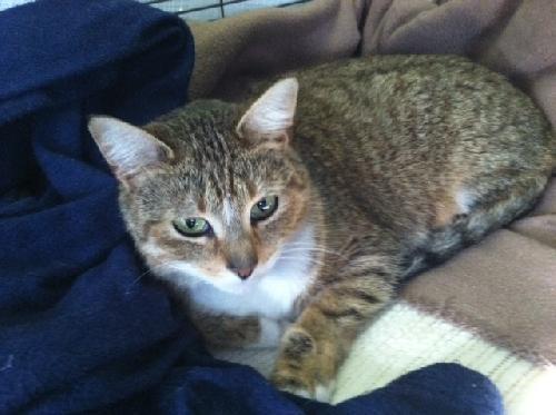 Pet of the Week - Tess