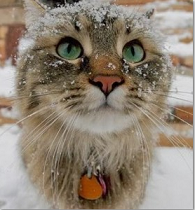 cat in snow snip