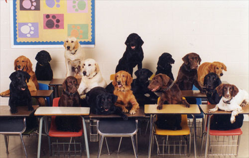dogs in classroom