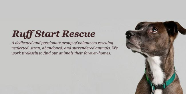 Ruff Start Rescue. We rescue animals. What'™s you™re superpower?
