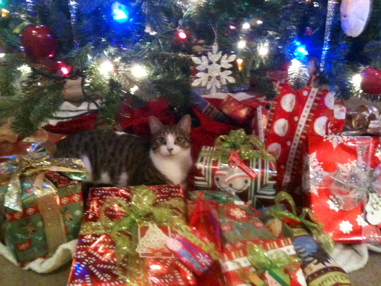 Christmas Kitty (Fri Clark)