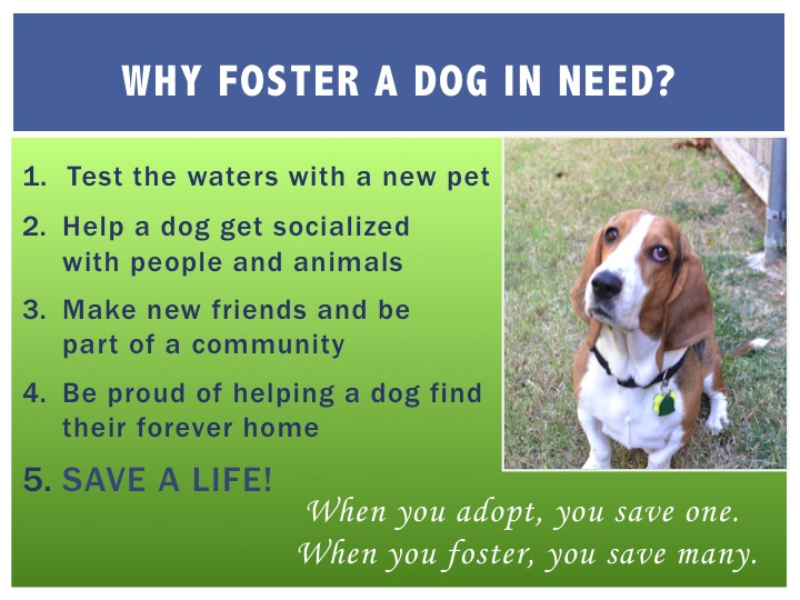 Foster Graphic