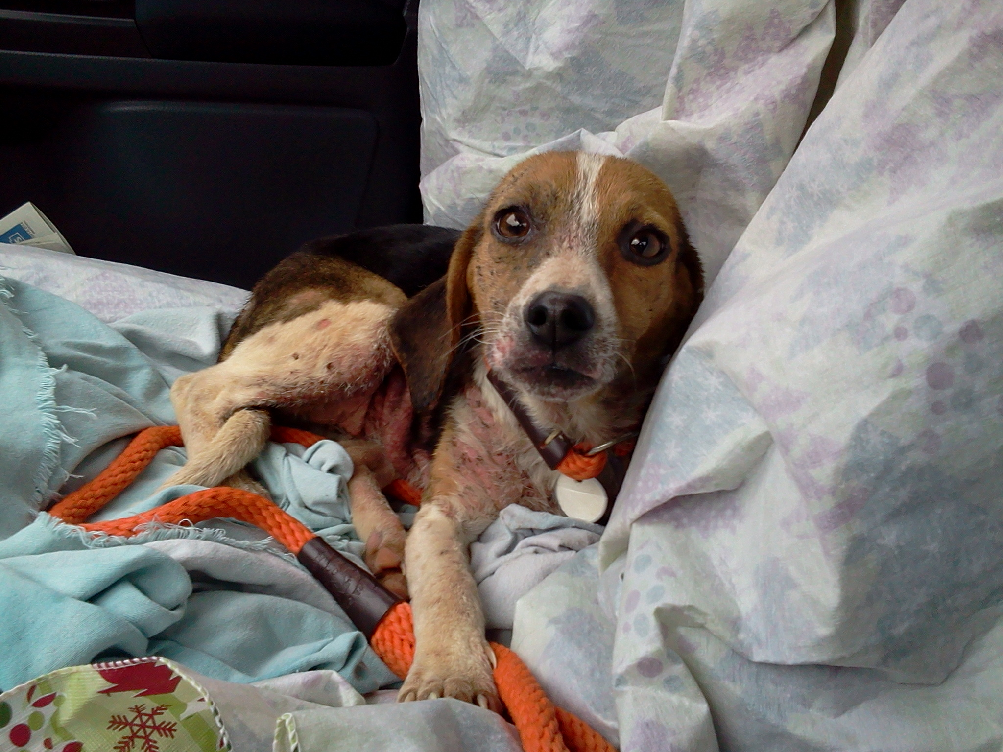2014-03-03 - Rosie Rescue Picture