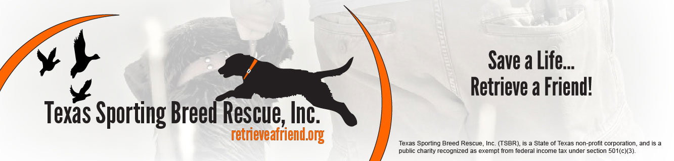 Texas Sporting Breed Rescue - Save a Life...Retrieve a Friend!