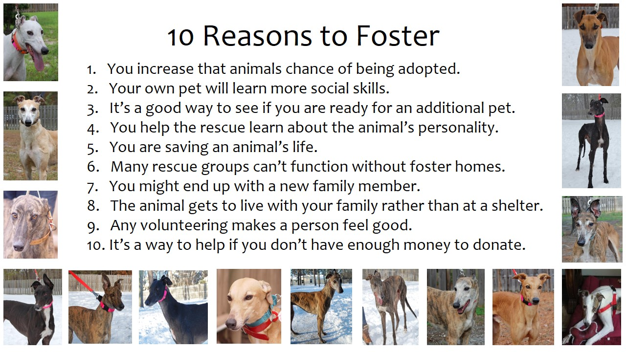 10 Reasons to Foster